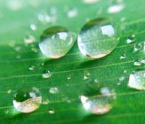 Gotas de água esféricas